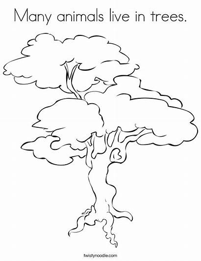 Coloring Tree Trees Animals Pages Many Jungle