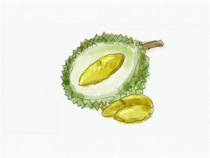 Durian Dribbble Fruit