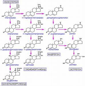 Лекарства от холестерина не влияющие на печень