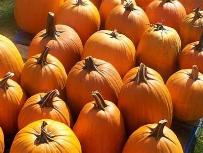 Pumpkin Desktop Fall Wallpapers Backgrounds Widescreen Wallpaperaccess