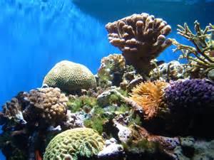 Ocean Coral Reef Habitat