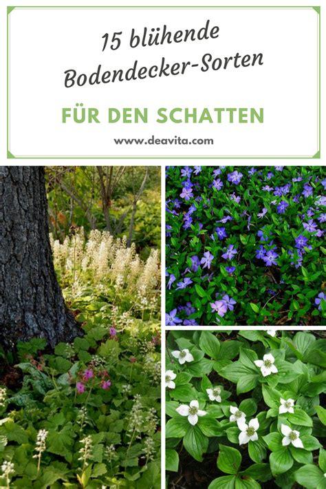 schnell rankende pflanzen rankende pflanzen winterhart schatten wohn design