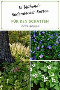 Schnell Rankende Pflanzen : rankende pflanzen winterhart schatten wohn design ~ Frokenaadalensverden.com Haus und Dekorationen