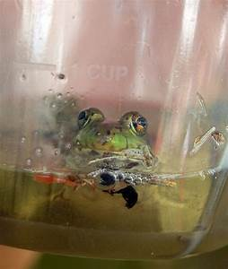 Summer Travel Gallery: Dousman Derby Days State Frog ...