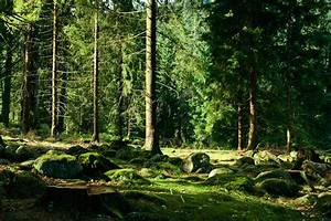 Landscape, Trees, Forest, Wallpapers, Hd, Desktop, And