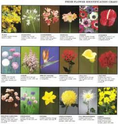 sympathy plants fresh flower identification chart rosie 39 s flower shop