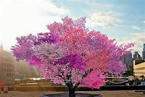 Arbre A Fruit : biodiversit l arbre aux 40 fruits le d fi cologique ~ Melissatoandfro.com Idées de Décoration
