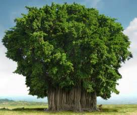 Le Arbre by Incredible India India National Tree