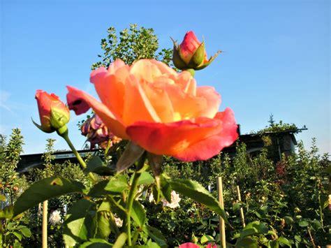 Wohnung Mit Garten Wels Land by G 228 Rtnern Im August Wels Wels Land