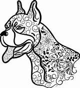 Boxer Coloring Dog Dogs Head Adult Doodle Boxers Istockphoto Cut sketch template