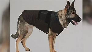 ballistic vests for police dogs come with pros and cons kboi With ballistic dog