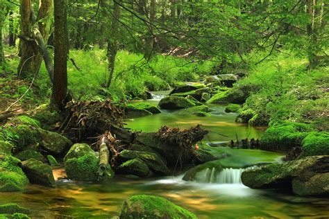 picture wood nature water landscape leaf tree