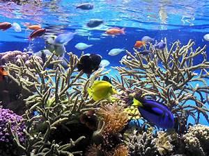New Aquariumist: Freshwater vs. Saltwater