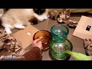 50 Best images about Pet Bowls on Pinterest Ceramics, Heart shaped bowls and Cat bowl
