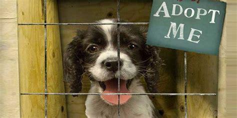 dog adoption  delhi dogs  sale  adoption  delhi