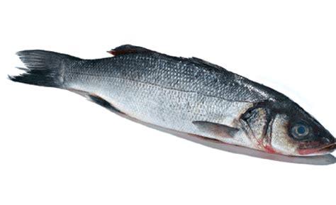cuisiner le loup de mer la recette le loup de mer aux poireaux société d