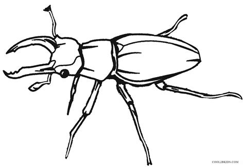 printable bug coloring pages  kids coolbkids