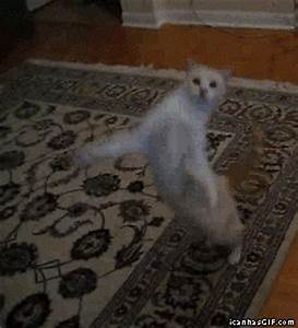Happy Cat GIF - Find & Share on GIPHY