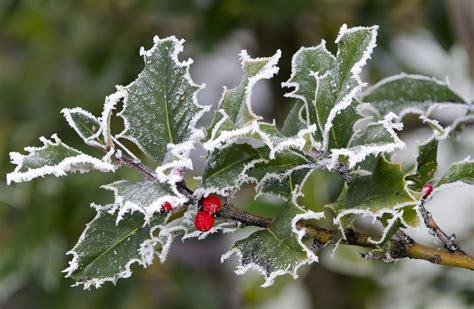 plants that will survive winter garden design 64135 garden inspiration ideas