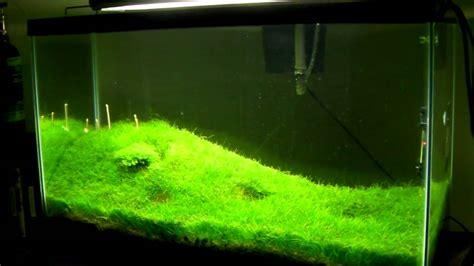 Hair Grass Aquascape by Japanese Hair Grass