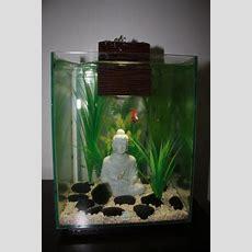 Fluval Chi 25l Betta Tank With Buddha  Fishys Pinterest
