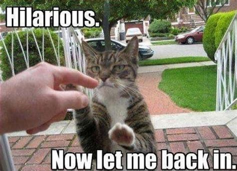 55 Funniest Cat Memes Ever Will Make You Laugh Right Meow