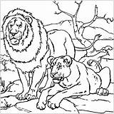 Lion Coloring Pages Printable Children Animals sketch template