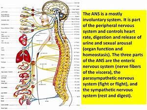 Peripheral Nervous System Diseases  Peripheral Nerve