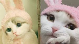 Best Funny Cute... Cute Cats