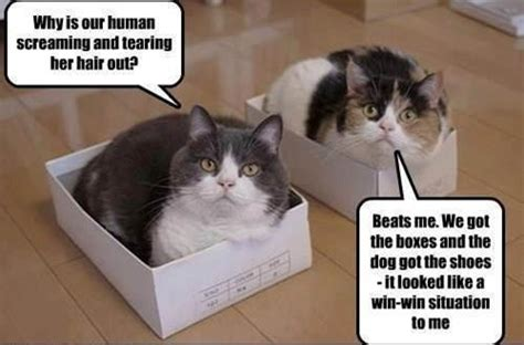 Cat Dog Win Win Meme ~ Silly Bunt Funny