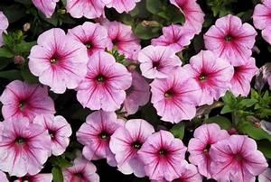 Plantes Vivaces Pour Massif : massif vivaces et fleurs annuelles plein soleil la ~ Premium-room.com Idées de Décoration