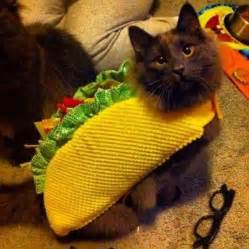 taco cat 17 best images about jest taco cats on cats