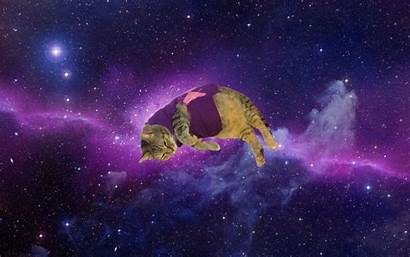 Cat Galaxy Space Cats Wallpapers Meme Background
