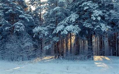 Winter Snow Forest Landscape Wallpapers Trees Nature