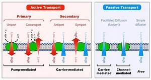 Transport Across Cell Membrane
