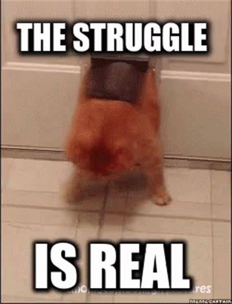 The Struggle Is Real Meme - struggle is gif struggle is real discover share gifs