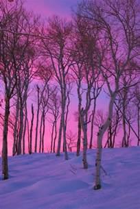 deco chambre violet le paysage d 39 hiver en 80 images magnifiques