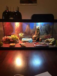 Best bearded dragon habitat ideas on