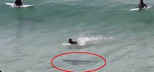 Shark Swims Under Surfers At Byron Bay In Australia