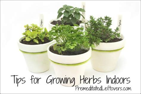 tips for growing an indoor herb garden premeditated