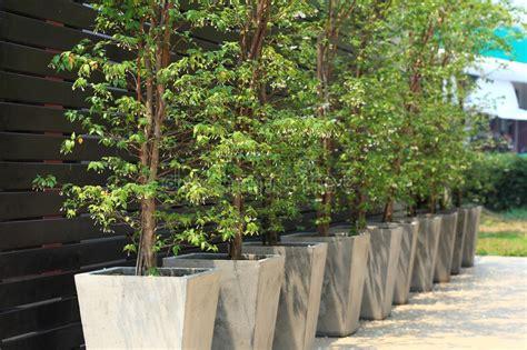 arbre aux usines mises en pot photo stock image du nature fond 42563516