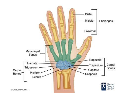 Hand Exercises Strengthen Your Fingers Hands