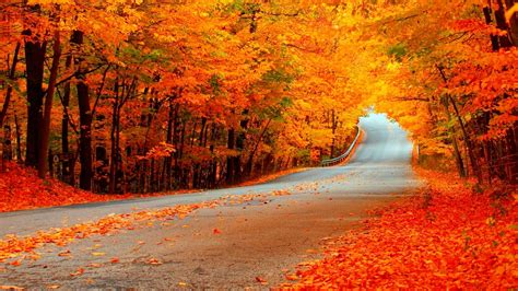 Orange Fall Wallpaper by Autumn Road With Orange Trees Hd Wallpaper Background