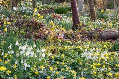 The Spring Woodland Garden. | Arcadia Garden Design