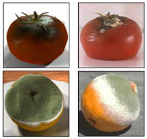 Stages in the decay of fruits | Patented By Nature
