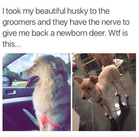dogs     spring shaves barkpost