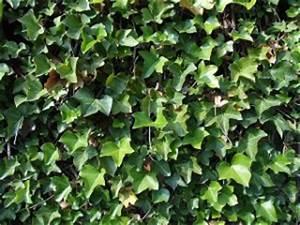 Grüne Wand Selber Bauen : gr ne wand selber machen und bepflanzen anleitung tipps ~ Bigdaddyawards.com Haus und Dekorationen