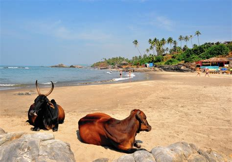 Most hippies in Goa are gone, but peace, love — and more ...