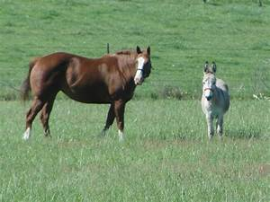 "What is the best ""companion"" animal for a lonely horse ..."