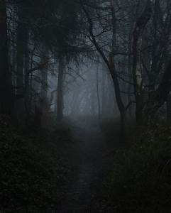 dark forest on Tumblr